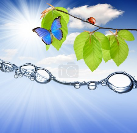 Spring branch with ladybug and butterfly