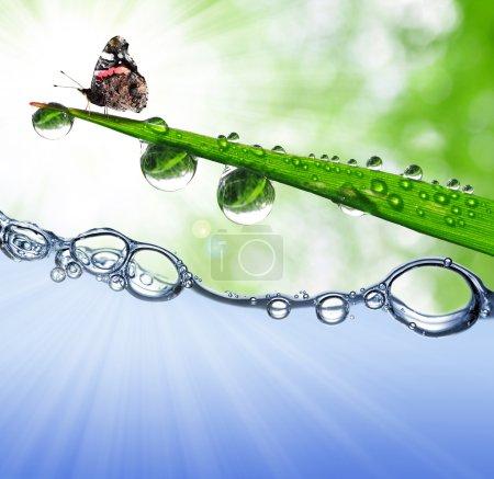 Photo pour Rosée sur herbe verte avec papillon - image libre de droit