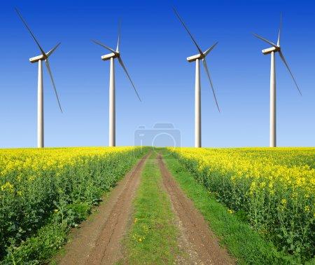 Foto de Campo de colza con turbinas de viento contra el cielo azul - Imagen libre de derechos