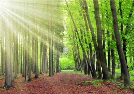 Photo pour Matin dans la forêt de printemps - image libre de droit
