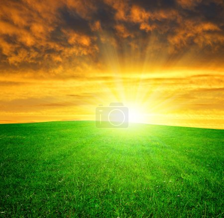 Photo for Spring meadow in the sunset - Royalty Free Image