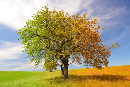 Photo for Season tree - season concepts - Royalty Free Image