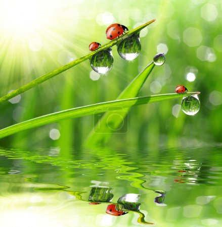 Photo for Fresh morning dew and ladybirds - Royalty Free Image