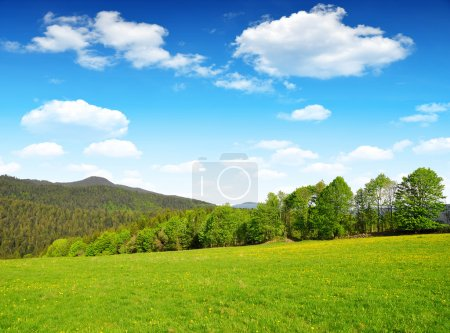 Photo for Spring landscape in Bavarian Forest National Park - Germany - Royalty Free Image