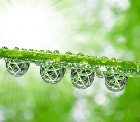 Photo for Fresh grass with dew drops close up - Royalty Free Image