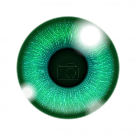 Illustration for Vector Human Green Eye isolated on white - Royalty Free Image