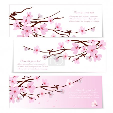 Illustration for Three banners with fresh pink ornamental Sakura flowers or cherry blossom symbolic of spring on long twigs on white and pink backgrounds with copyspace for text - Royalty Free Image