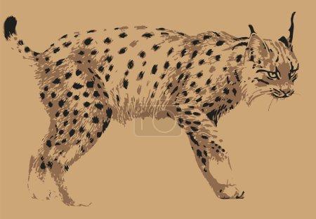 Illustration pour Lynx des animaux sauvages - image libre de droit
