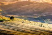 Warm sunset landscape on the hills of Val d'Orcia