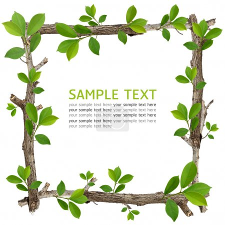 Twig and green leaf frame