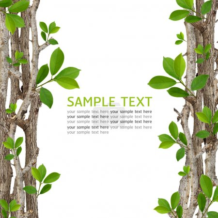 Photo for Twig and green leaf frame isolated on white background. - Royalty Free Image