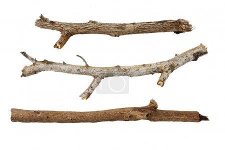 Photo pour Branches isolées sur fond blanc . - image libre de droit