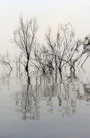 Trees without leaves reflected in the water