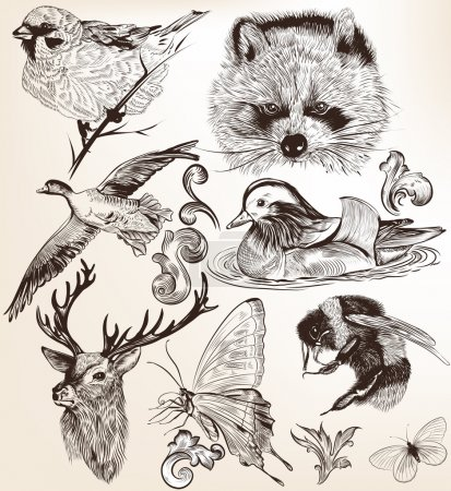 Illustration for Collection of high detailed vector animals for design - Royalty Free Image