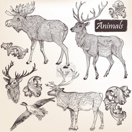 Collection of vector hand drawn animals in vintage style