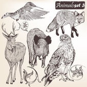 Collection of vector hand drawn detailed animals