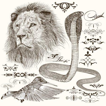 Illustration pour Ensemble vectoriel d'animaux détaillés dessinés à la main avec des éléments calligraphiques - image libre de droit