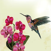 Fashion  floral background with orchid and hummingbird
