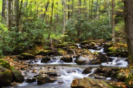 Creek in the NC Forest