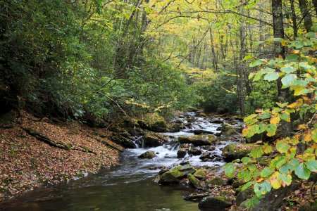 Photo pour Ruisseau du Palais de justice près du Palais de justice tombe dans la forêt nationale de pisgah près de palais de justice du diable en Caroline du Nord - image libre de droit