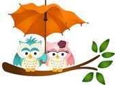 Owls under umbrella