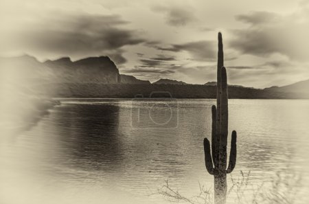 Photo for Scenic landscape with Saguaro cactus mountains and sun ray flare. Photo made in black and white. - Royalty Free Image