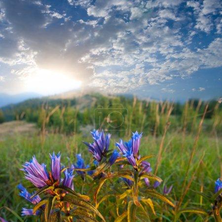 Blumen in der Steppe am frühen Morgen