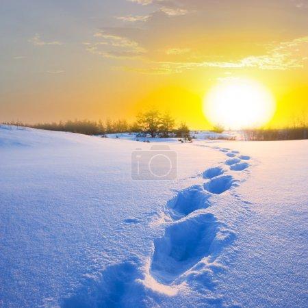 Winter snow desert