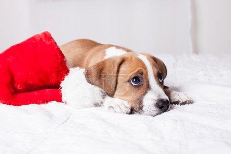 Very Cute Christmas Puppy