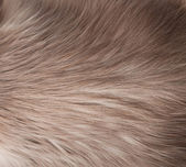 Fur texture close-up background