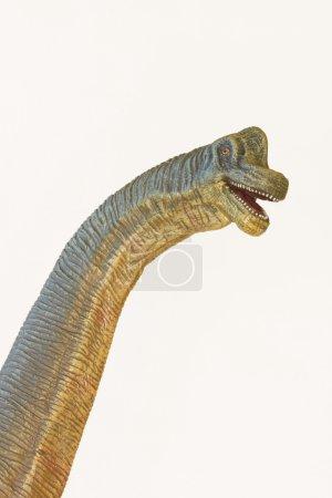 A Tall Brachiosaurus Dinosaur, or Arm Lizard