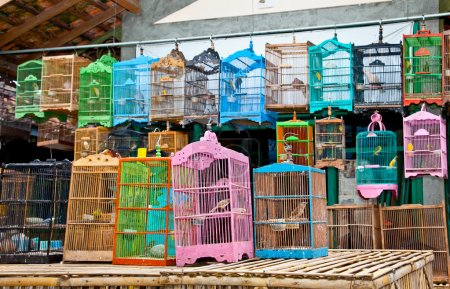 Litle birds in the cage. Java, Indonesia.