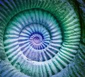 Abstraktní barvy Ammonitský prehistorické fosilních