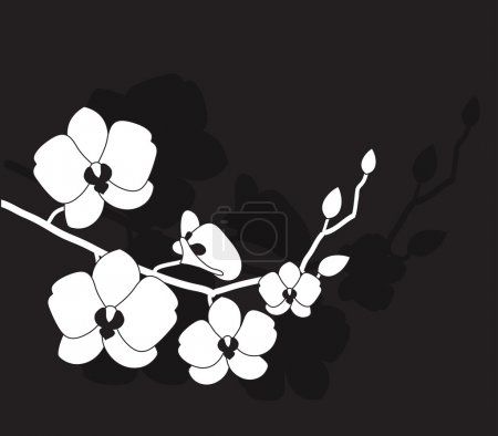 Illustration for Stylized white orchid on a black background - Royalty Free Image