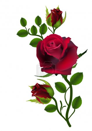 Card flower rose