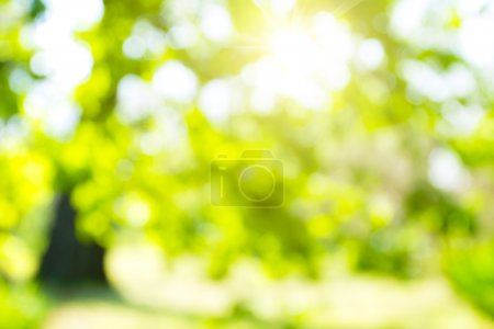 Photo for Abstract nature background - Royalty Free Image
