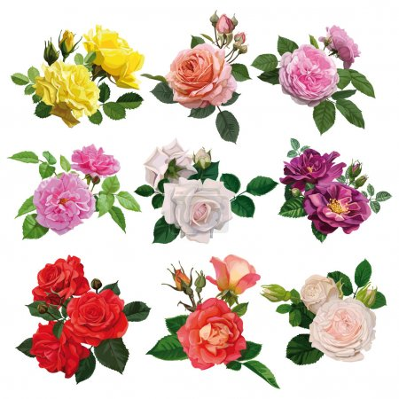 Illustration for Set of flowers, multicolored roses with leaves - Royalty Free Image