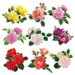 Set of flowers, multicolored roses with leaves...