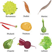 Different vegetables on a white background