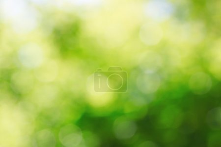 Photo pour Fond naturel abstrait ensoleillé et croissant avec un accent doux - image libre de droit