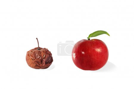 fresh and rotten apple isolated on