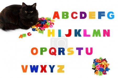 Alphabet and black cat on white background.