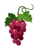 Red grapes Vector illustration