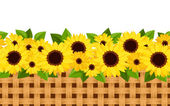 Horizontal seamless background with sunflowers and wicker Vector illustration