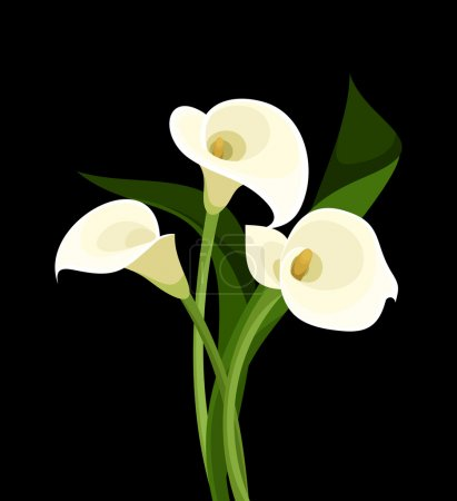 Vector illustration of white calla lilies on a bla...