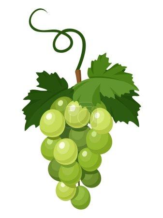 Illustration pour Illustration vectorielle de grappes de raisins verts isolées sur fond blanc . - image libre de droit