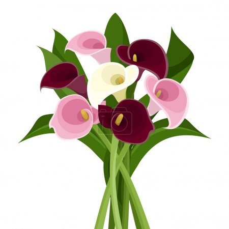 Illustration for Vector bouquet of purple, pink and white calla lilies on a white background. - Royalty Free Image