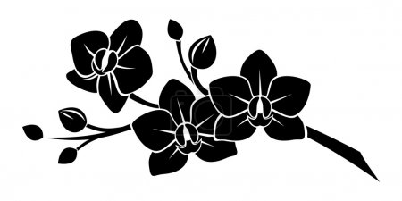 Illustration for Vector black silhouette of branch with orchid flowers on a white background. - Royalty Free Image
