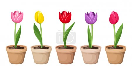 Tulips in pots. Vector illustration.