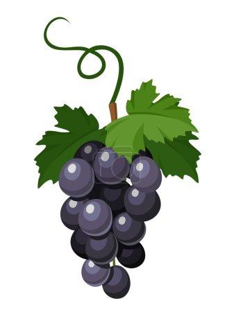 Illustration pour Bouquet vectoriel de raisins noirs isolé sur fond blanc . - image libre de droit